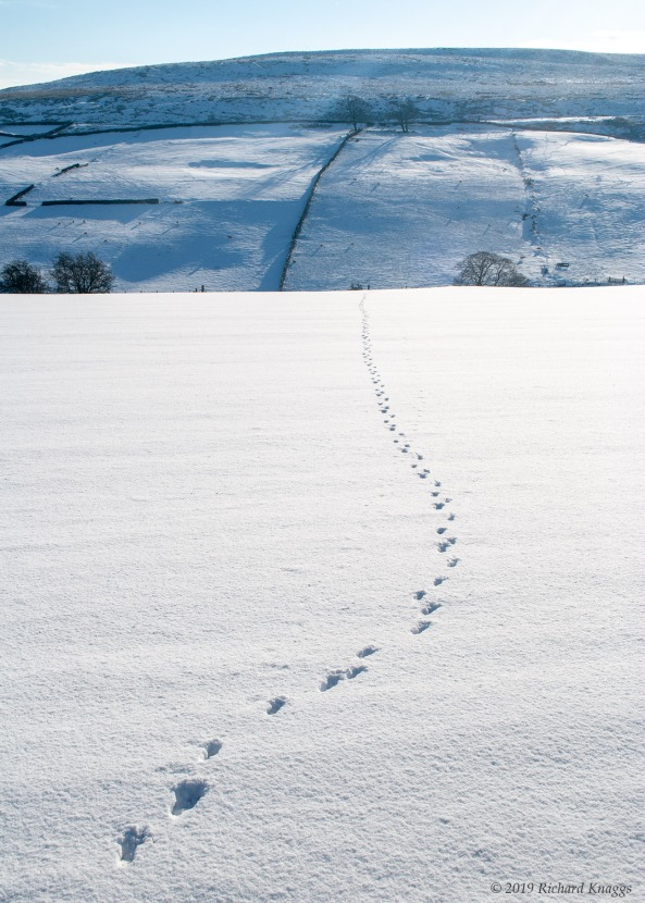 Tracks in the Snow